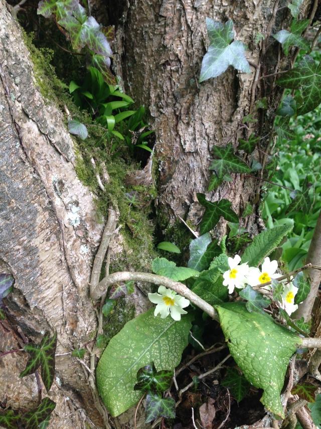 Primroses on tree