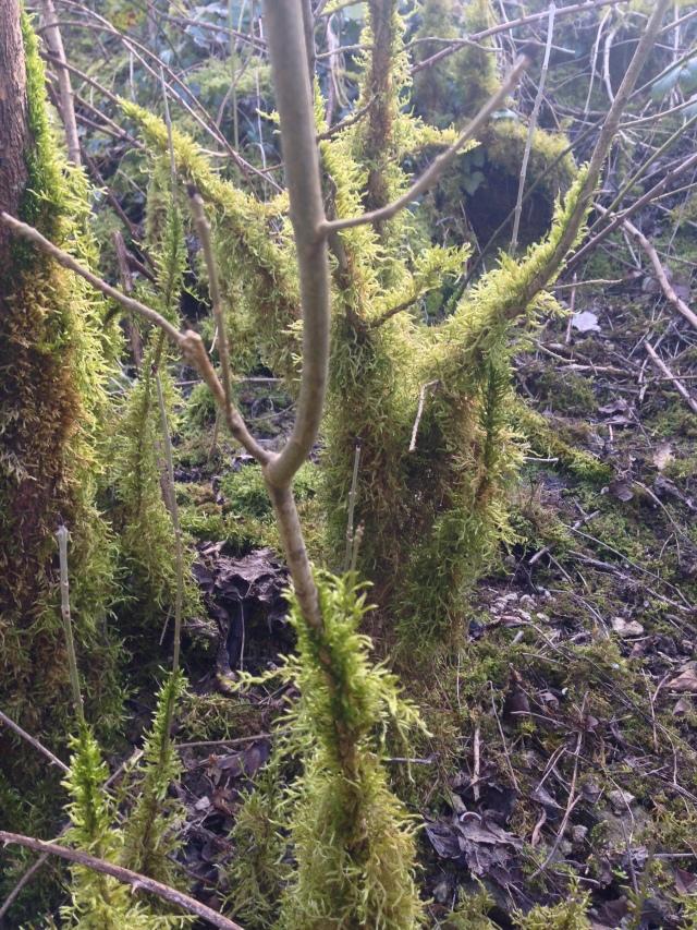 Shaggy moss on wood